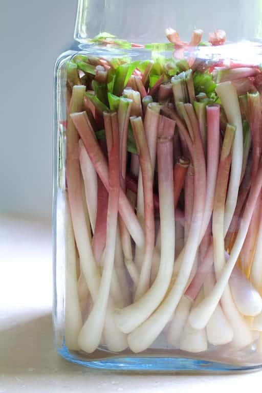 Cleaned and trimmed ramps in a jar awaiting pickling brine before becoming pickled ramps.