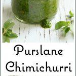 Pinterest image for Purslane Chimichurri